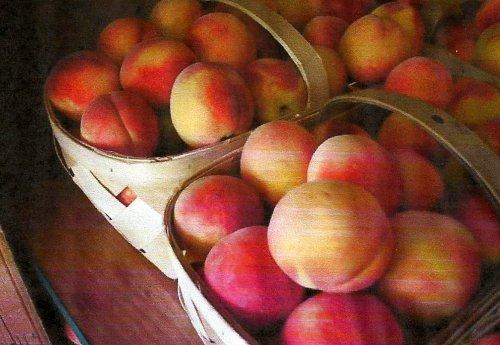 peaches, Georgia Golden Bells peaches